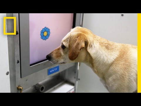 Xxx Mp4 Brain Games For Old Dogs Could Improve Their Mental Health National Geographic 3gp Sex