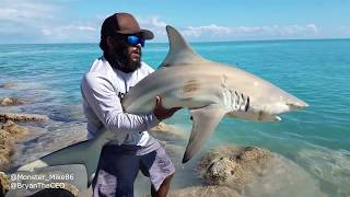 What Type of SHARK Did We Catch?