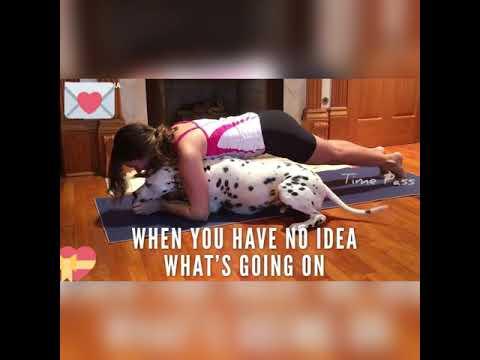 Dog yoga   Yoga videos   Dog Functional   yoga with girl