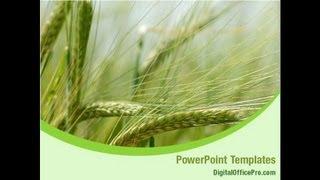 Wheat Field PowerPoint Template Backgrounds - DigitalOfficePro #01527