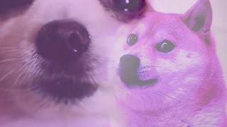 Amazing Doggo Compilation (but also with Memes) (WOW)