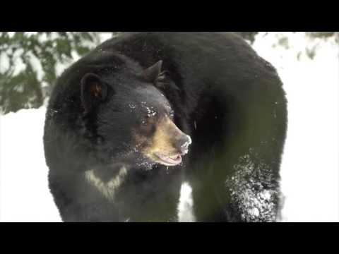 watch Oregon Zoo animals frolic in snow