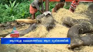 Aranmula: Elephant in critical condition due to TB