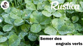 Semer des engrais verts