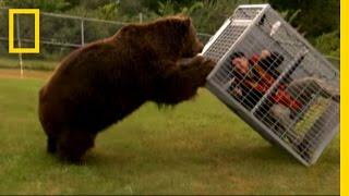 Brown Bear Attack | Dangerous Encounters: Alaska's Bear Country and Beyond