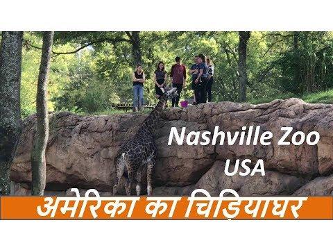 Xxx Mp4 Nashville USA Zoo Tour 2017 In Hindi अमेरिका का चिड़ियाघर 3gp Sex