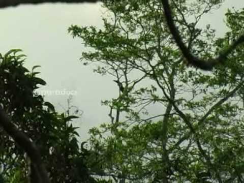 Ecuador viaje a la selva amazónica tráiler