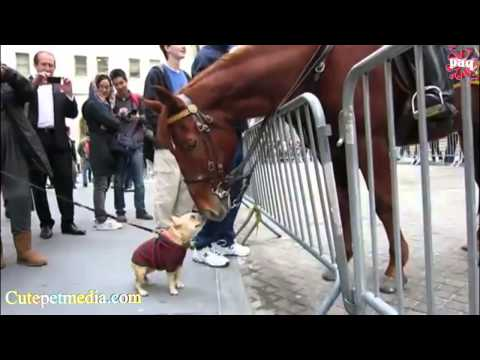 FUNNY HORSES ★ Funny Horse Videos [Funny Pets]