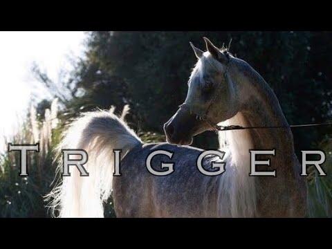 Xxx Mp4 Trigger Arabian Horse Music Video 3gp Sex