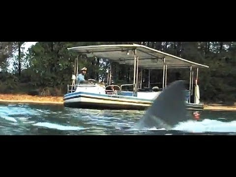 The JAWS Ride Movie - The Story of Gordon on Amity 3