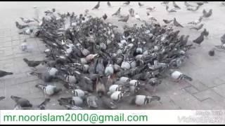 আল্লাহু আল্লাহু আল্লাহ গজল