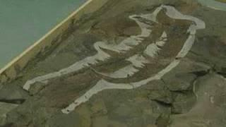 Sea scorpion - bigger than a human