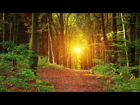 Xxx Mp4 3 Hours Music With No Loops Inner Peace Relaxing Soothing Music 3gp Sex