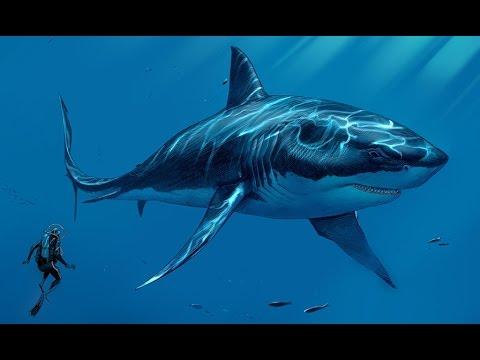 Xxx Mp4 विश्व की अब तक की खतरनाक व्हेल मछली Biggest Megalodon Shark Mystery 3gp Sex