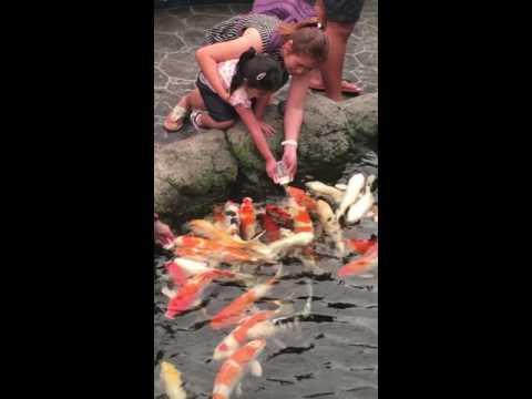 Xxx Mp4 Fish Milk Feeding Pattaya 3gp Sex