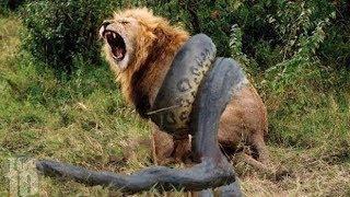 10 CRAZIEST Animal Fights Caught On Camera