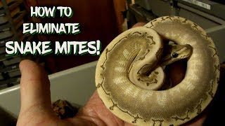 How to Eliminate Snake Mites