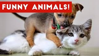Funniest Animal Moments Caught On Tape Compilation January 2017 | Funny Pet Videos