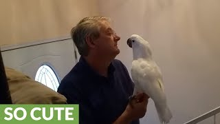 Cockatoo becomes thrilled when owner arrives at home