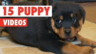 15 Funny Puppies Video Compilation 2016