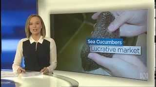 ABC News – SA scientists look to sea cucumbers for aquaculture boost