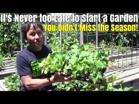 It's Never too Late to Start a Garden - You Didn't Miss the Season !
