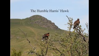 Hunting with The Humble Harris