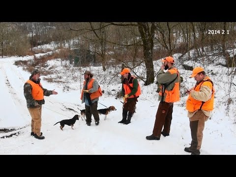 Skyview s Beagles Rabbit Hunting Annual Ohio Rabbit Hunt With Good Friends