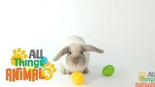 RABBITS: Animals for children. Kids videos. Kindergarten | Preschool learning