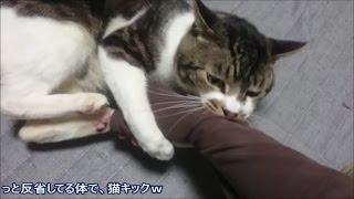今日はママの腕に猫キック&ガブリもお見舞いする猫リキちゃん☆激しい!猫ちゃんとの遊び・噛みつき☆【リキちゃんねる 猫動画】Cat videos キジトラ猫との暮らし