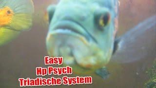 Heilpraktiker Psychotherapie Prüfungsvorbereitung 11 Triadische System