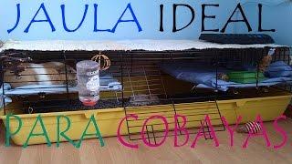 LA JAULA IDEAL PARA COBAYAS / 2 PISOS EN LA MISMA JAULA Y JAULA ABIERTA