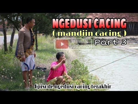 Xxx Mp4 NGEDUSI CACING Mandiin Cacing Part 3 Komedi Pendek Jawa SWS 3gp Sex