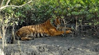 #Sundarban -Largest Mangrove Forest in the World - Inside the Sundarbans