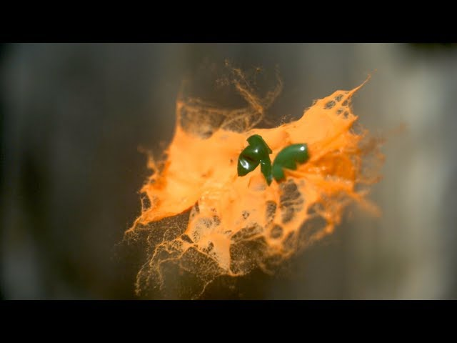 Mid-air Paintball Collisions in Slow Mo - The Slow Mo Guys
