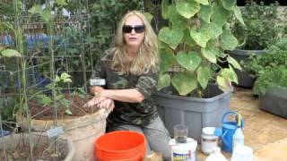 How to Grow Container Cucumbers by Nurse Amy