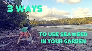 Three Easy Ways to Use Seaweed in Your Garden