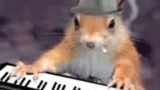 Os animais cantores