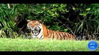 The Sundarbans, Trip To Sundarbans, Bangladesh, Mangrove Forest Year 2016