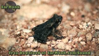 Frog Sounds -  Foley Tanzania - Free Download Sound Design - Relaxing Nature Sounds