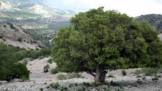 Nature of Ilam -  Iran  - PART 3