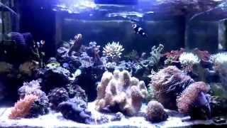 Reeff