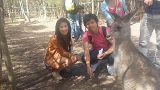 kangaroo feeding at moonlit sanctuary