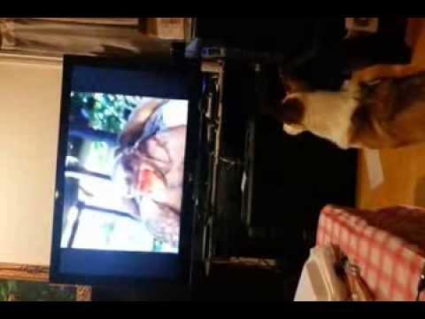 Xxx Mp4 Saba Watching Turtle Porn 3gp Sex