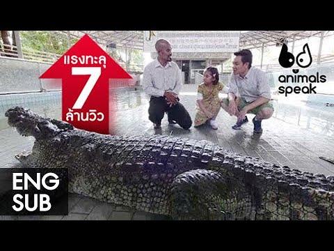 Animals Speak by Mahidol คนดีพาเที่ยวฟาร์มจระเข้ 15 มิถุนายน 2557