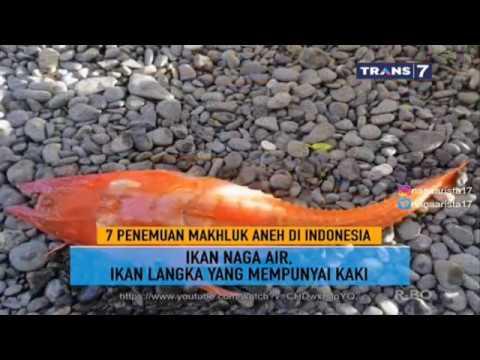 7 Penemuan Makhluk Aneh Di Indonesia ~ On The Spot Trans 7 Terbaru