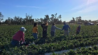 Are Farmworkers & Immigrants Being Left Behind Amid Raging Southern California Wildfires?