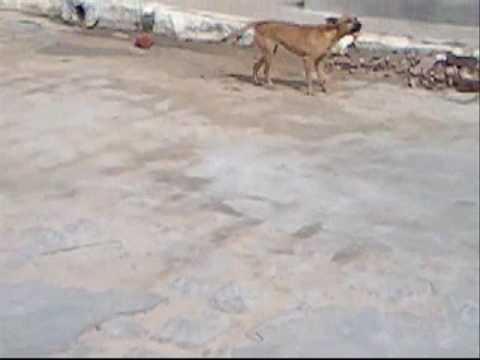 plug TV2 Briga de cachorros
