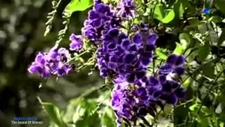 ♡ The Sound Of Silence (Amazing PanFlute)