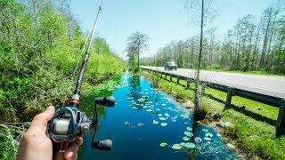 This TINY Canal Was LOADED With FISH!!!!